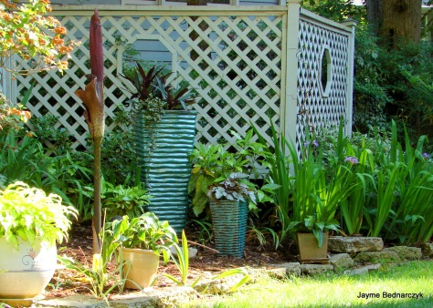 Amorphophallus making it's Spring Debut at the Thompson Garden