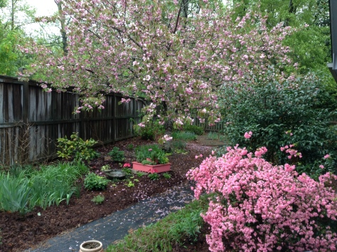 Spring at Vistamar... Azalea and Kwanzan Cherry.